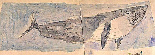 Ballena. Dibujo de Amalia Rodriguez Serrano